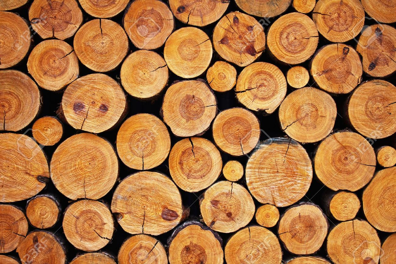 Firewood logs (Special offer 5% off) Buy Now !!! - Tree ...