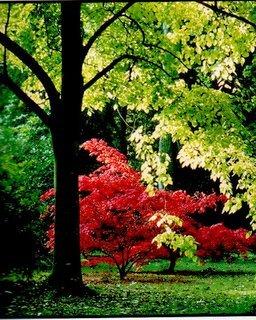 Arboretum species